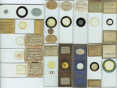 15 Spiculae Microscope Slides by Various Makers