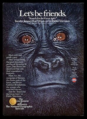 1976 gorilla photo 'Let's be friends' National Geographic Gulf PBS print ad