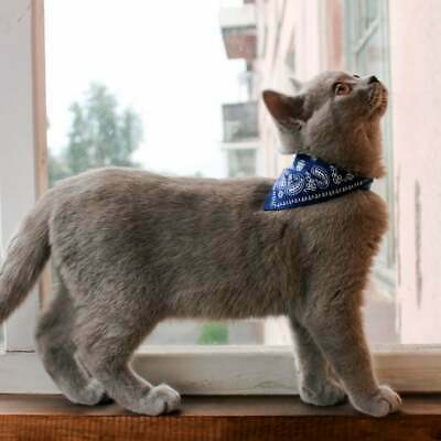 Leather Cat Collar with Neckerchief Scarf Bandana . UK Seller