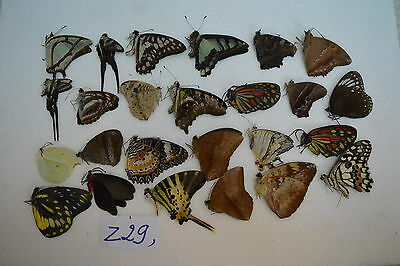 z29  # Lot of unmounted butterfly NORTH Vietnam