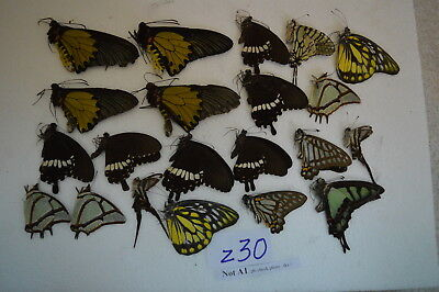 z30  # Lot of unmounted butterfly NORTH Vietnam