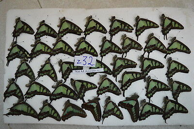 z32  # Lot of unmounted butterfly NORTH Vietnam