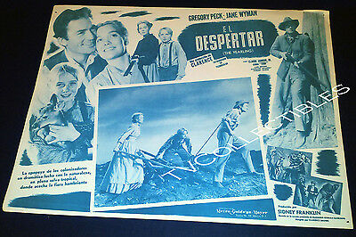 Mexican Lobby Card~ THE YEARLING ~Gregory Peck ~Jane Wyman ~Claude Jarman Jr