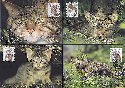 053040 WWF Katzen Cats Slovensko Maximum Card ´s