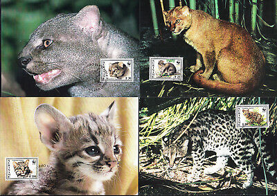 053267 WWF Katzen Cats Suriname Maximum Card ´s