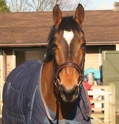New English leather brown raised and padded cavasoon snaffle bridle Cob size