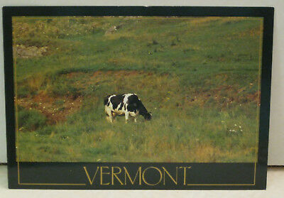 Two Head Cow Only in Vermont Postcard