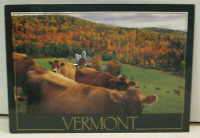Autumn Foliage Farm Dairy Cattle Vermont Postcard