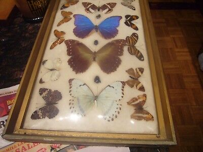 Vintage Butterfly Collection 18 Cotton Mounted & Framed