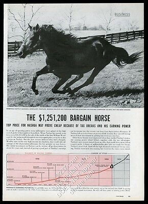 1956 Nashua race horse photo vintage print article