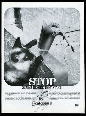 1962 Siamese Cat wants chocolate milk photo 3M Scotchgard vintage print ad