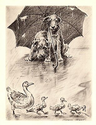 1946 Vintage IRISH TERRIER Print Irish Terrier Illustration Original Print #2417