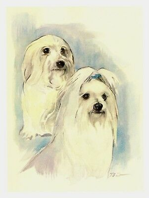 Vintage MALTESE Dog Print Dog Gallery Wall Art Maltese Illustration #2418