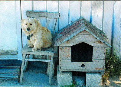 DOG ON THE CHAIR GUARDS HIS RESIDENCE Modern Russian postcard
