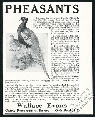 1908 English Ring Neck Pheasant photo Oak Park breeder vintage print ad