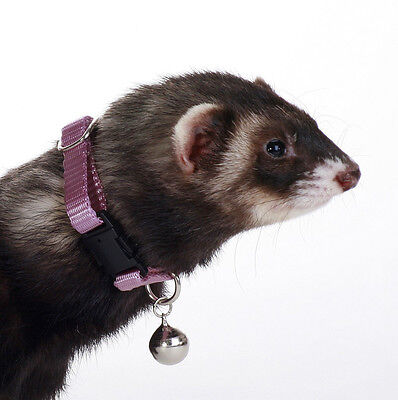 Marshall Pet Ferret Collar With Bell Purple Jingle Free Shipping To Usa Only