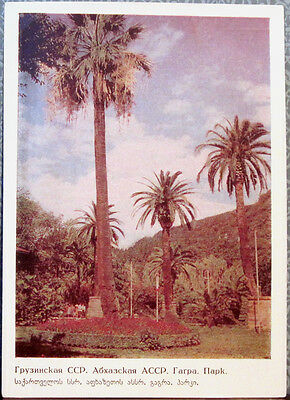 1967 Soviet Postcard View In The Park In Gagra (Gagry)