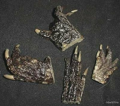 """LOT OF 4 REAL GATOR ALLIGATOR FEET TAXIDERMY claw toes 2-3"""" Genuine Authentic"""