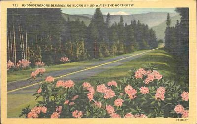 (ofa) Flower Postcard: Rhododendrons Blossoming