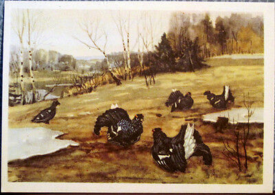 1954 Russian postcard SPRING: HEATH-COCK'S MATING PLACE