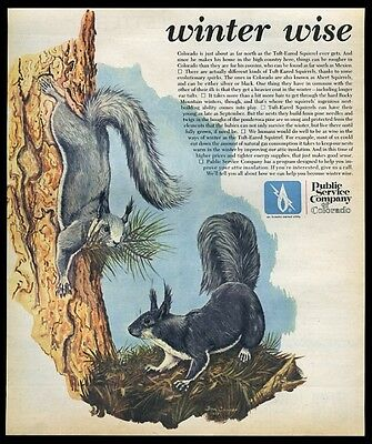 1975 tuft-eared squirrel Colorado Albert's squirrels art Public Service print ad