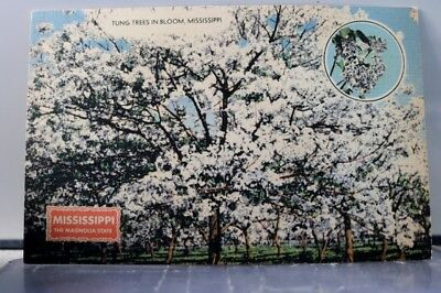 Mississippi MS Magnolia State Tung Trees Bloom Postcard Old Vintage Card View PC