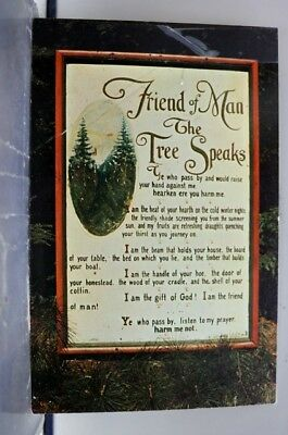 Pennsylvania PA Cook Forest State Park Postcard Old Vintage Card View Standard
