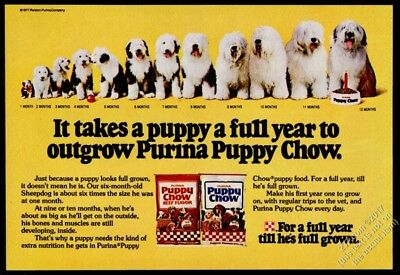 1978 Old English Sheepdog 12 photo puppy adult Puppy Chow dog food print ad