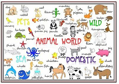 A4 Poster Sign Educational Children Nursery Childminders The Animal World
