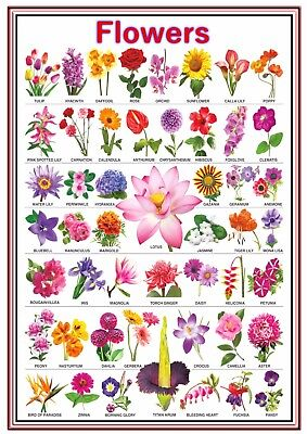 A4 Poster Sign Educational Children Nursery Childminder School Flowers