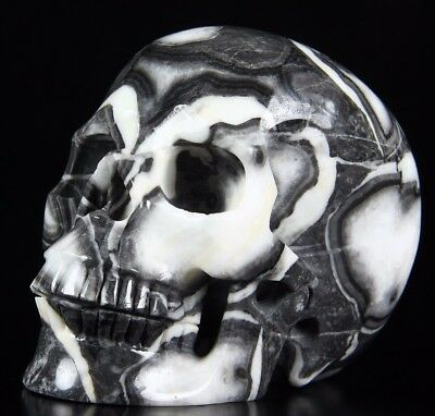 """Huge 5.2"""" RARE FOSSIL Carved Crystal Skull, Realistic,Crystal Healing"""