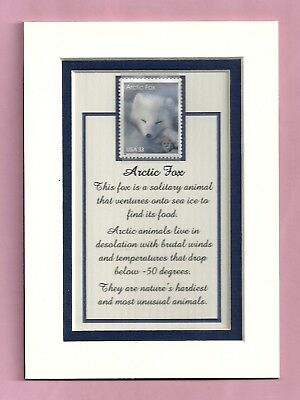 3289 -Arctic Fox  Stamp-Ready-to-be-framed Gift