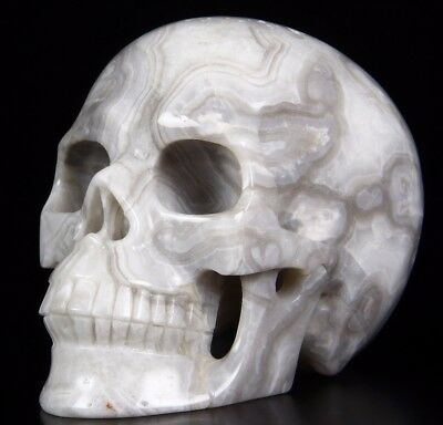 """Huge 5.2"""" CRAZY LACE AGATE Carved Crystal Skull, Realistic,Crystal Healing"""