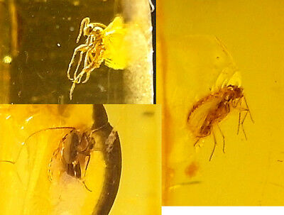 3 GENUINE FOSSILISED INSECTS IN AMBER circa 44 million BC