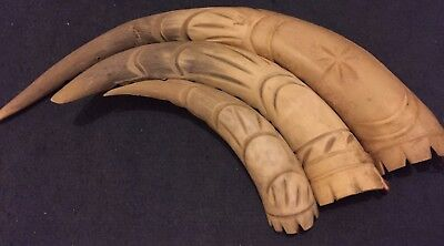 African Tribal Horn Antique Ornament Nature Vintage Geometric Animal Tusk