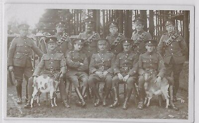 WW1 ear ARMY SERVICE CORPS GROUP 'RANKS' WITH COMPANY GOATS (or LUNCH ? )