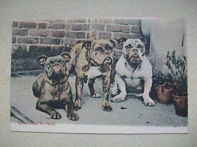 1905 J. WELCH & SONS PPC - ''GUARDIANS OF THE PIECES'' Bull Dogs (Bakewell P/M)