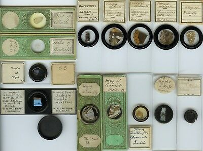 14 Butterfly & Moth Wing Microscope Slides by Various Makers