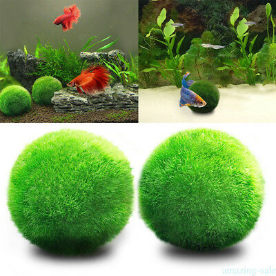 Artificial Water Plant Aquatic Green Grass for Aquarium Fish Tank Landscape Q2