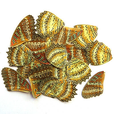 20 REAL BUTTERFLY wing jewelry artwork material ooak DIY gift #42