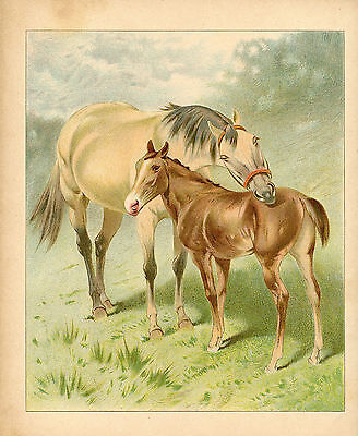 Horse With Foal Equine Animals Antique Lithograph 1892