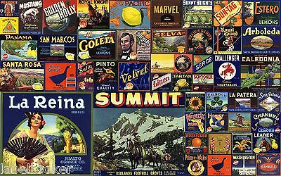 50 Genuine Fruit Box Crate Labels Vintage Lot Advertising Nos 1930S 1940S 50S 2A