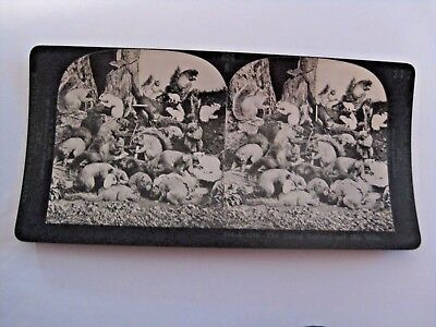 Rare Antique The Dying Squirrel & His Wife Stereoview Card