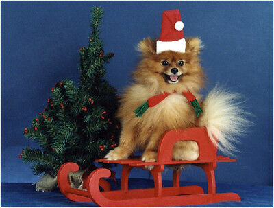 Pet Christmas Cards:Dog Pomeranian Red Sleigh