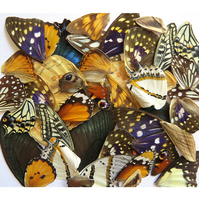 LOTS  REAL BUTTERFLY wing jewelry butterfly material ooak fairy DIY artwork #8