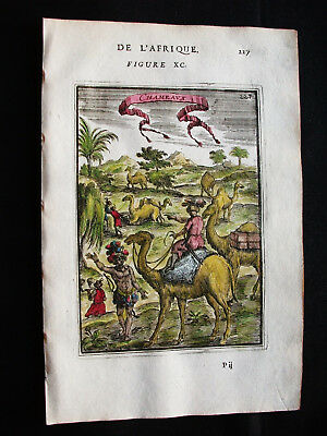 1683 MALLET - Orig. PRINT of differents CAMELS, DROMEDARIES, EGYPT, LYBIA AFRICA