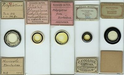 5 Polycystina Microscope Slides by Various Makers