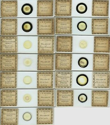13 Plant Pollen Microscope Slides by J.B. Rogers (American)