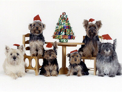 20 Pet Christmas Cards:Dog Cairn Terrier & Yorkie - Yorkshire