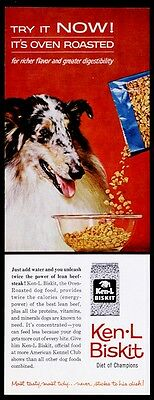 1961 Australian Shepherd photo Ken-L Biskit dog food vintage print ad